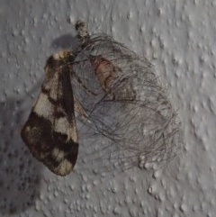 Anestia (genus) (A tiger moth) at Spence, ACT - 5 Oct 2020 by Laserchemisty