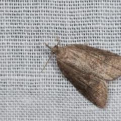 Microdes squamulata (Dark-grey Carpet) at Tidbinbilla Nature Reserve - 9 May 2018 by kasiaaus