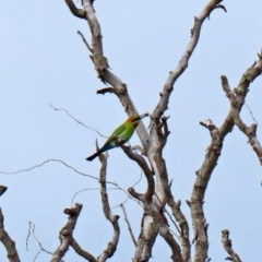Merops ornatus (Rainbow Bee-eater) at Jerrabomberra Wetlands - 9 Oct 2020 by RodDeb