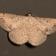 Taxeotis (genus) (Unidentified Taxeotis geometer moths) at Melba, ACT - 19 Nov 2015 by kasiaaus