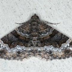 Epyaxa sodaliata (Sodaliata Moth) at Lilli Pilli, NSW - 7 Oct 2020 by jbromilow50