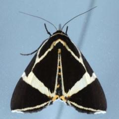 Fodina ostorius (Moth Fodina ostorius) at Lilli Pilli, NSW - 6 Oct 2020 by jbromilow50