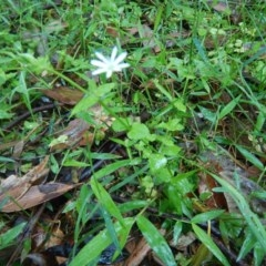 Unidentified Plant (TBC) at Meroo National Park - 6 Oct 2020 by GLemann