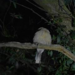 Podargus strigoides (Tawny Frogmouth) at Bowral - 29 Sep 2020 by pdmantis