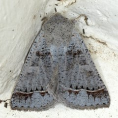 Pantydia sparsa ( A noctuid moth) at Ainslie, ACT - 9 Oct 2020 by jbromilow50