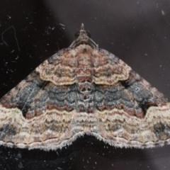 Epyaxa subidaria (Subidaria Moth) at Lilli Pilli, NSW - 6 Oct 2020 by jbromilow50