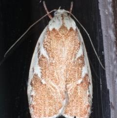 Euchaetis rhizobola (Moth) at Lilli Pilli, NSW - 5 Oct 2020 by jbromilow50