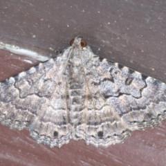 Diatenes aglossoides (An Erebid Moth) at Lilli Pilli, NSW - 2 Oct 2020 by jbromilow50