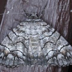 Dysbatus singularis (Line Moth) at Lilli Pilli, NSW - 3 Oct 2020 by jbromilow50