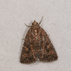 Hypoperigea tonsa (A noctuid moth) at Melba, ACT - 21 Oct 2020 by kasiaaus