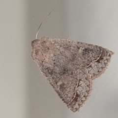 Pantydia sparsa ( A noctuid moth) at Melba, ACT - 22 Oct 2020 by kasiaaus