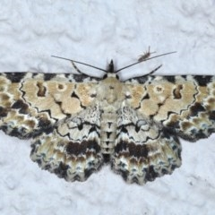 Sandava scitisignata (A noctuid moth) at Ainslie, ACT - 23 Oct 2020 by jbromilow50