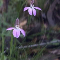 Caladenia carnea (Pink fingers) at Jedbinbilla - 24 Oct 2020 by Judith Roach
