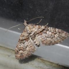 Phrissogonus laticostata (Apple looper moth) at Flynn, ACT - 24 Oct 2020 by Christine