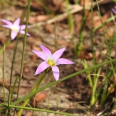 Romulea rosea var. australis (Onion Grass) at Macarthur, ACT - 16 Sep 2020 by Liam.m