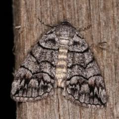 Dysbatus singularis (Dry-country Line-moth) at Melba, ACT - 2 Nov 2020 by kasiaaus