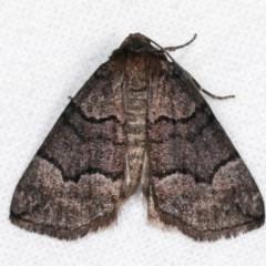 Dysbatus undescribed species (A Line-moth) at Melba, ACT - 2 Nov 2020 by kasiaaus