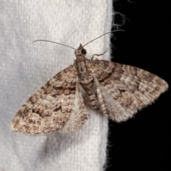Phrissogonus laticostata (Apple looper moth) at Melba, ACT - 3 Nov 2020 by kasiaaus