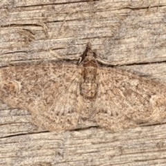 Chloroclystis filata (Filata Moth, Australian Pug Moth) at Melba, ACT - 3 Nov 2020 by kasiaaus