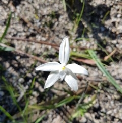 Glossodia major (Wax lip orchid) at Tidbinbilla Nature Reserve - 14 Oct 2020 by Ranger788