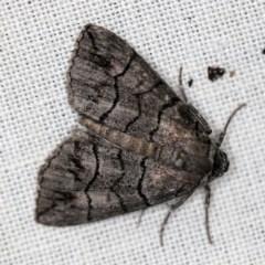 Dysbatus singularis (Dry-country Line-moth) at Goorooyarroo - 6 Nov 2020 by ibaird