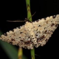 Sandava scitisignata (A noctuid moth) at Goorooyarroo - 6 Nov 2020 by kasiaaus