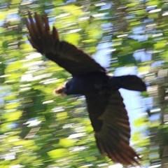 Unidentified Other Birds (TBC) at Wodonga - 9 Nov 2020 by Kyliegw