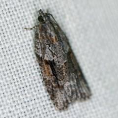 Acropolitis rudisana (A leafroller moth) at Goorooyarroo - 6 Nov 2020 by ibaird