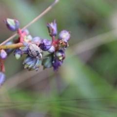 Unidentified Beetle (TBC) at Moruya, NSW - 21 Nov 2020 by LisaH