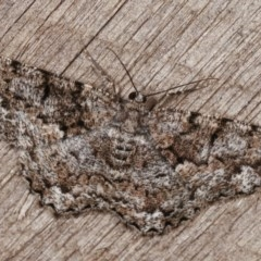 Unplaced externaria (Mahogany Bark Moth) at Melba, ACT - 13 Nov 2020 by kasiaaus