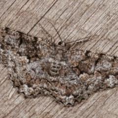 Unplaced externaria (Mahogany Bark Moth) at Melba, ACT - 13 Nov 2020 by kasiaaus