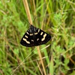 Phalaenoides tristifica (Willow-herb Day-moth) at Murrumbateman, NSW - 15 Dec 2020 by SimoneC