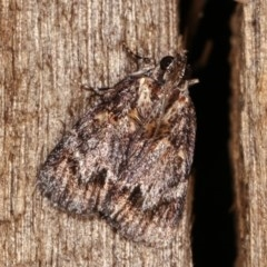 Spectrotrota fimbrialis (A Pyralid moth) at Melba, ACT - 18 Nov 2020 by kasiaaus