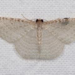 Poecilasthena pulchraria (Australian Cranberry Moth) at Melba, ACT - 19 Nov 2020 by kasiaaus