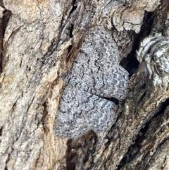 Psilosticha absorpta (Fine-waved Bark Moth) at Griffith Woodland - 16 Dec 2020 by AlexKirk