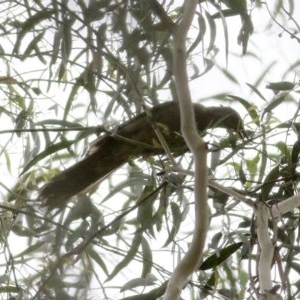 Unidentified Bird (TBC) at suppressed by Kyliegw