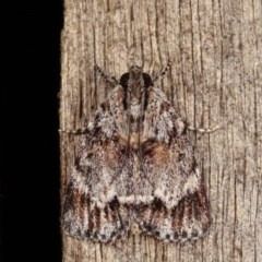 Spectrotrota fimbrialis (A Pyralid moth) at Melba, ACT - 13 Dec 2020 by kasiaaus