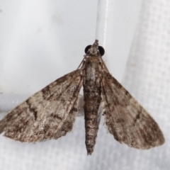 Chloroclystis metallospora (A Geometer moth (Larentiinae)) at Melba, ACT - 14 Dec 2020 by kasiaaus