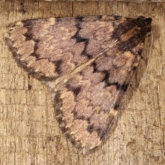 Mormoscopa phricozona (A Herminiid Moth) at Melba, ACT - 14 Dec 2020 by kasiaaus