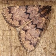 Mormoscopa phricozona (A Herminiid Moth) at Melba, ACT - 14 Dec 2020 by kasiaaus
