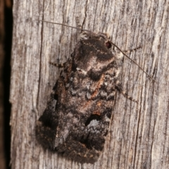 Thoracolopha verecunda (A Noctuid moth (group)) at Melba, ACT - 14 Dec 2020 by kasiaaus