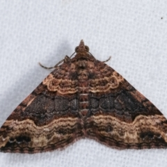 Epyaxa subidaria (Subidaria Moth) at Melba, ACT - 14 Dec 2020 by kasiaaus