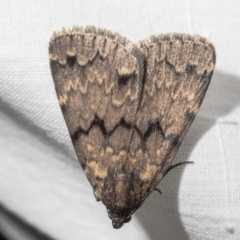 Mormoscopa phricozona (A Herminiid Moth) at Macgregor, ACT - 29 Dec 2020 by Roger