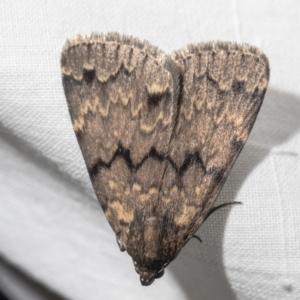 Mormoscopa phricozona at Macgregor, ACT - 29 Dec 2020