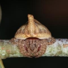 Dolophones sp. (genus) (Wrap-around spider) at Melba, ACT - 16 Dec 2020 by kasiaaus