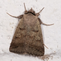 Pantydia sparsa ( A noctuid moth) at Melba, ACT - 16 Dec 2020 by kasiaaus