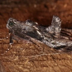 Salma pyrastis (A Pyralid moth) at Melba, ACT - 20 Dec 2020 by kasiaaus