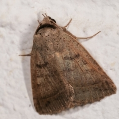 Pantydia sparsa ( A noctuid moth) at Melba, ACT - 21 Dec 2020 by kasiaaus