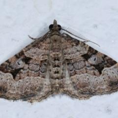 Epyaxa subidaria (Subidaria Moth) at Melba, ACT - 22 Dec 2020 by kasiaaus