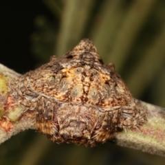 Dolophones sp. (genus) (Wrap-around spider) at Flea Bog Flat, Bruce - 29 Dec 2020 by kasiaaus